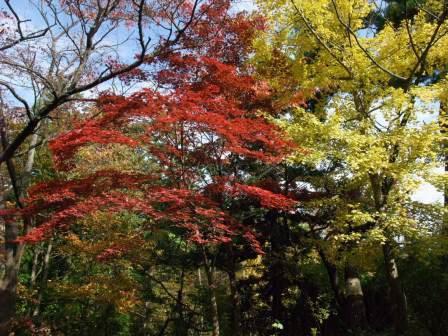 翠ヶ丘公園の紅葉