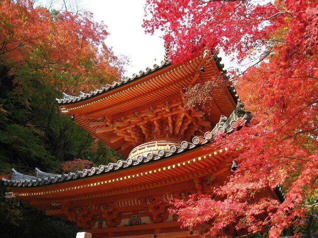 牛滝山の紅葉