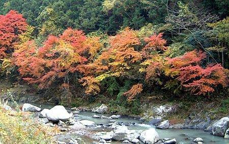 玉川峡の紅葉