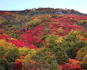 大雪山(赤岳、銀泉台)