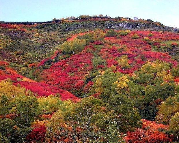 大雪山(赤岳、銀泉台)の紅葉