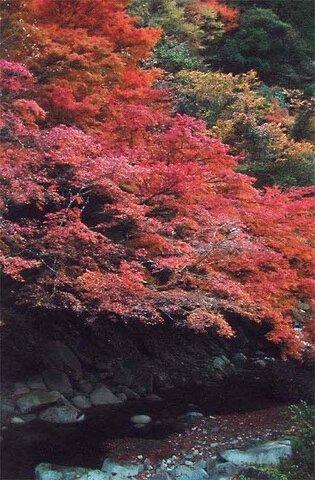 木谷峡の紅葉