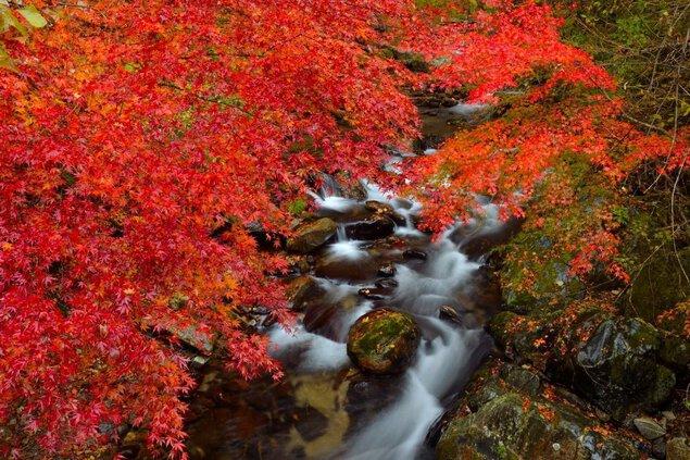 花園渓谷の紅葉
