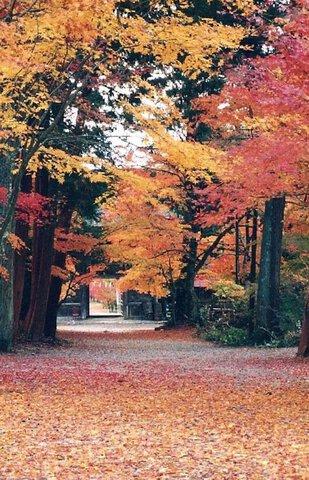 大矢田もみじ谷(大矢田神社)の紅葉