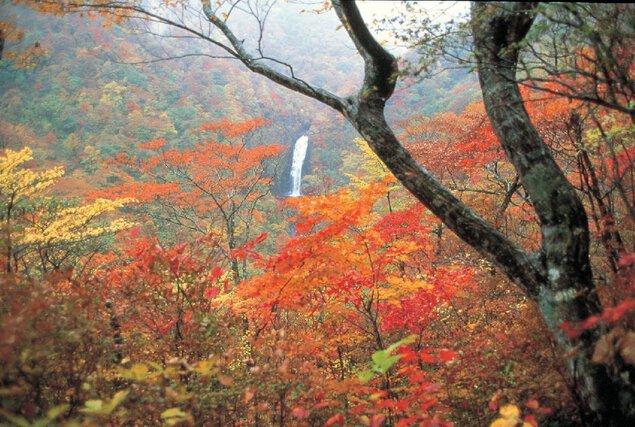山形蔵王の紅葉