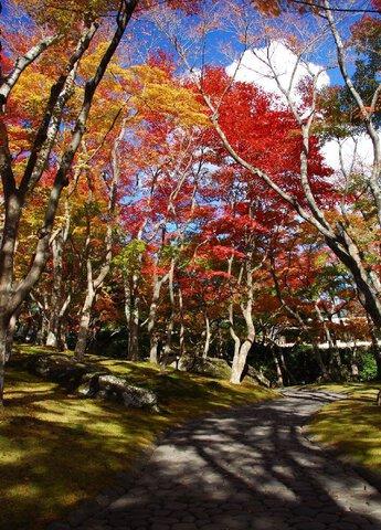 箱根(強羅)の紅葉