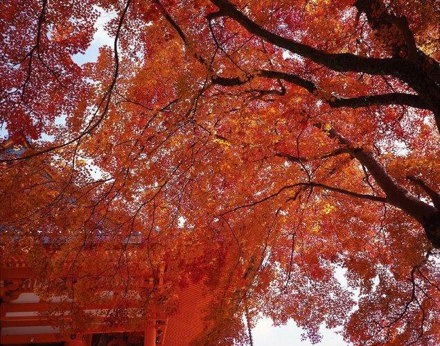 箕面(勝尾寺)の紅葉
