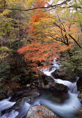 赤西渓谷の紅葉
