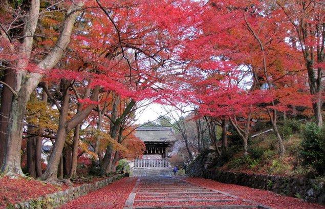洛東(山科毘沙門堂)の紅葉