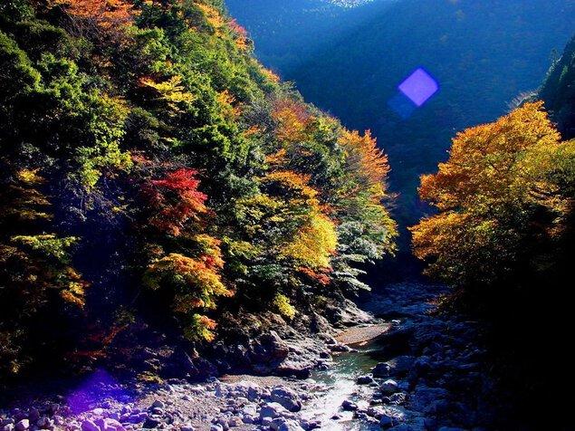 明神峡の紅葉