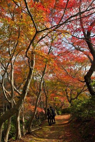 白野江植物公園の紅葉