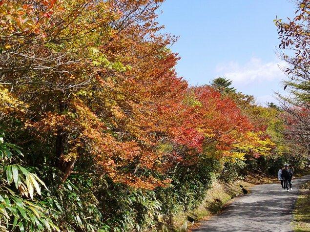 御在所岳(山上)の紅葉