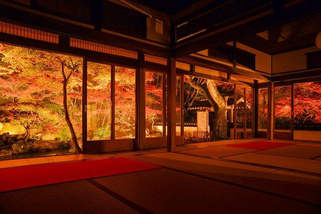 藤江氏魚楽園の紅葉