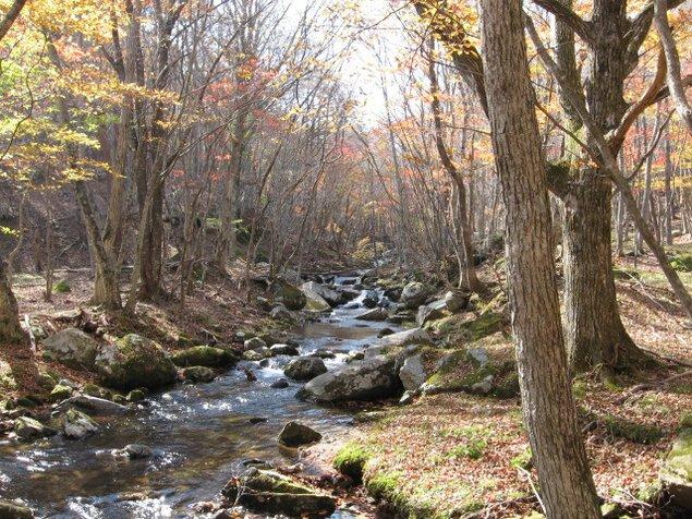 大窪渓谷の紅葉