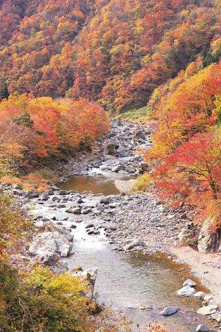 九頭竜峡の紅葉