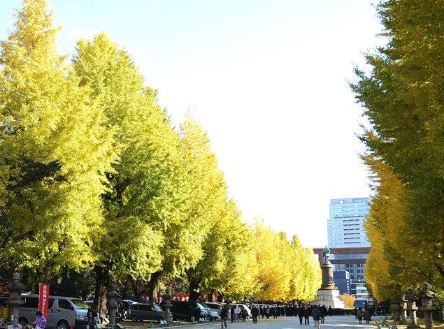 靖國神社の紅葉