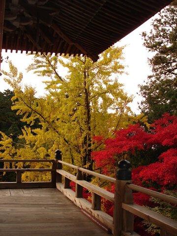 書寫山圓教寺の紅葉