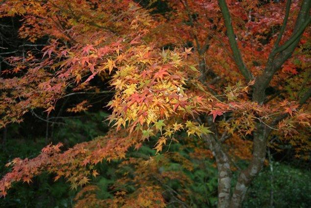 大滝川森林公園の紅葉