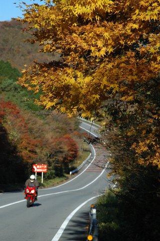 MAZDAターンパイク箱根の紅葉