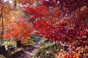 千葉山ハイキングコース