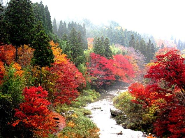 大井平公園の紅葉