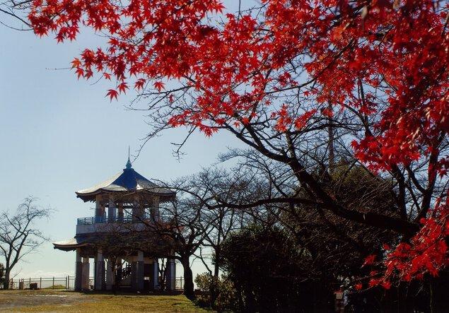 弘法山の紅葉