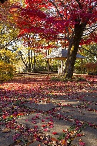 生田緑地の紅葉