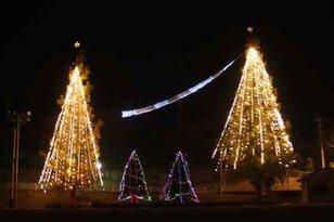南島原市立有馬小学校グラウンド・県道30号線沿い街路樹