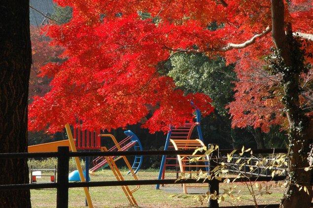 佐白山の紅葉