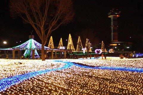 国営木曽三川公園 木曽三川公園センターの紅葉写真