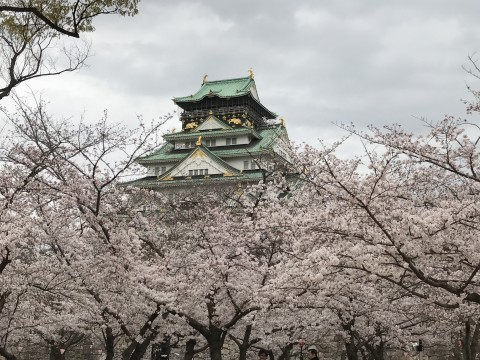 【桜・見頃】大阪城公園の桜名所写真