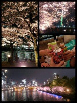 【桜・見頃】毛馬桜之宮公園の桜名所写真