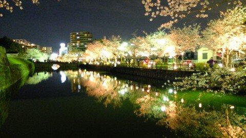 【桜・見頃】小田原城址公園の桜名所写真