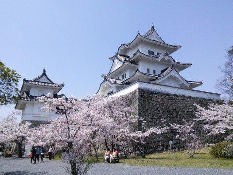 【桜・見頃】上野公園の桜名所写真