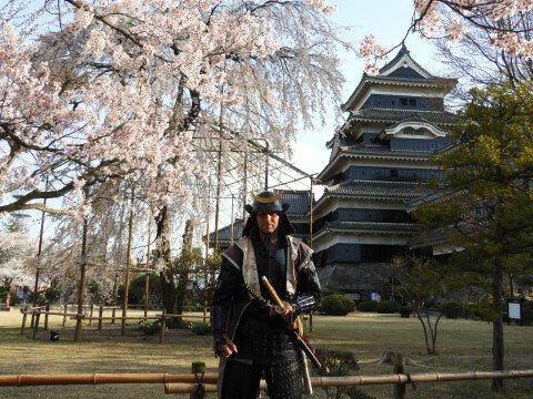 【桜・見頃】国宝 松本城の桜名所写真