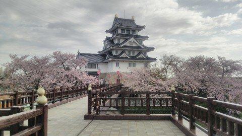 【桜・見頃】墨俣一夜城址・犀川堤の桜名所写真
