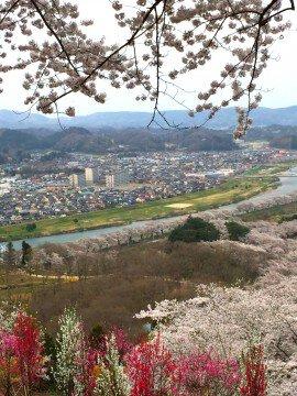 【桜・見頃】柴田町船岡城址公園の桜名所写真