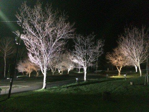 【桜・見頃】芦別市旭ケ丘公園の桜名所写真