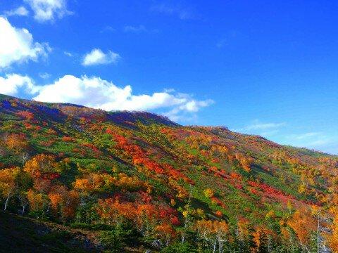 大雪山(赤岳、銀泉台)の紅葉写真