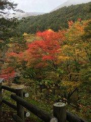 鹿沢温泉の紅葉