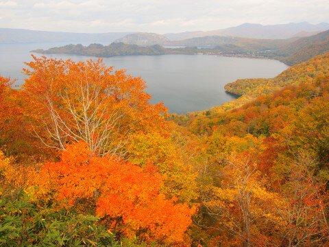 十和田湖・十和田大館樹海ライン沿線の紅葉写真