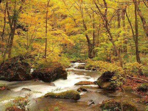 奥入瀬渓流の紅葉写真
