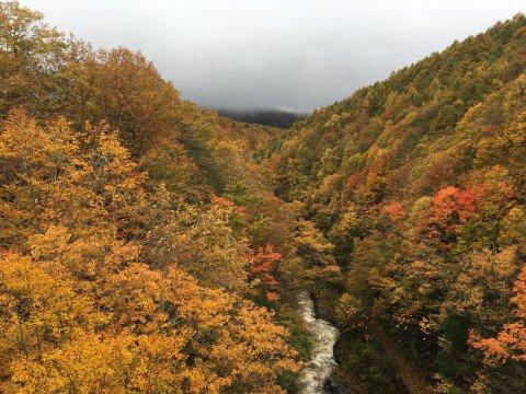 磐梯吾妻レークライン(中津川渓谷)の紅葉写真