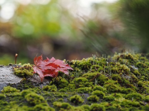 白駒の池の紅葉写真