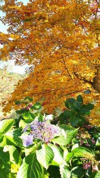 裏磐梯高原(桧原湖付近)の紅葉写真