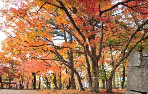 盛岡城跡公園(岩手公園)の紅葉写真
