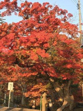 中野もみじ山の紅葉写真