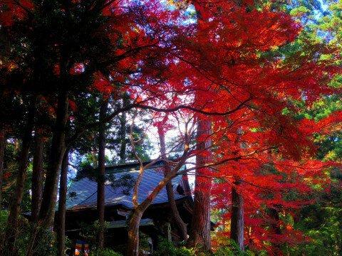 中尊寺の紅葉写真