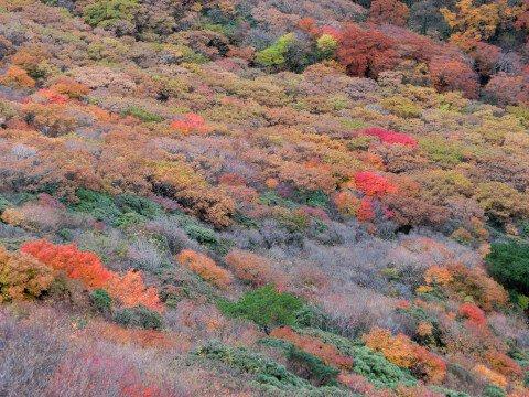 くじゅう連山の紅葉写真