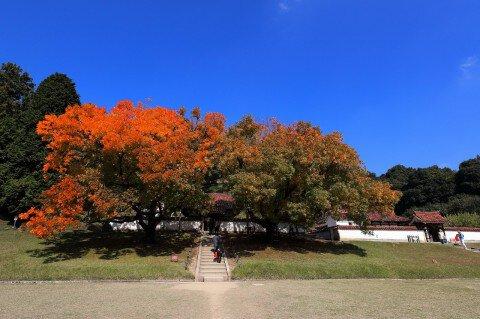 旧閑谷学校の紅葉写真